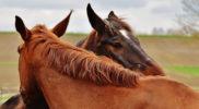 Scenariusz zajęć logopedycznych – Utrwalanie nazw i odgłosów zwierząt