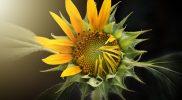 Natura to nieustające zmiany – refleksje psychologa