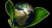 Postawa proekologiczna – jak możemy ją kształtować w szkole?