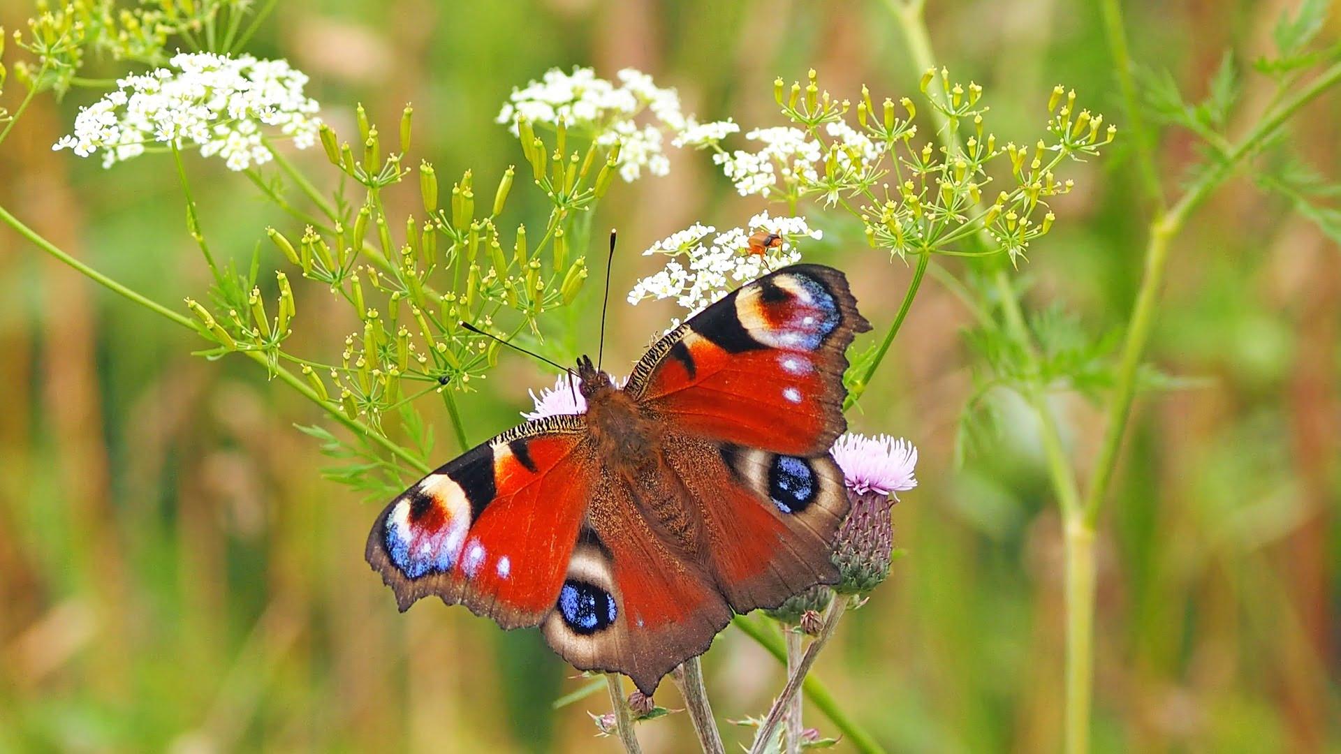 Kolorowy motyl na łące