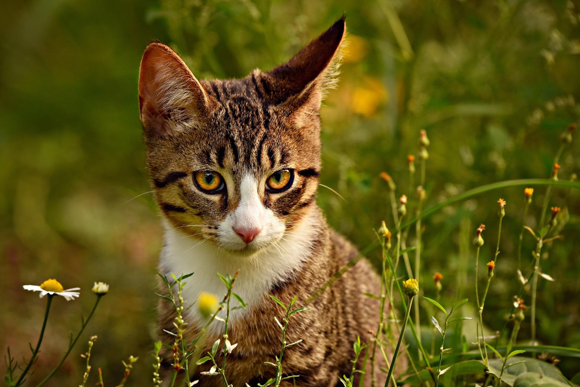 Szarobury kot na trawie