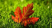 Jesienny spacer – scenariusz zajęć logopedycznych w grupie trzylatków