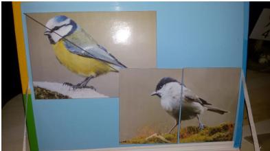 puzzle magnetyczne z wizerunkiem ptaków