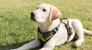Scenariusz zajęć integracyjnych – Czy pies jest zawsze przyjacielem człowieka?