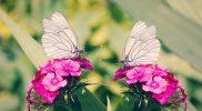 """Funkcjonowanie w środowisku – scenariusz zajęć """"Motyl"""""""