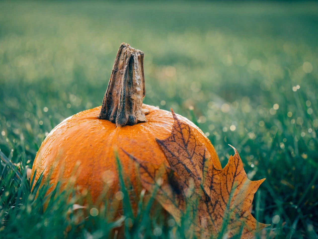Dynia leży na trawie, obok żółty liść