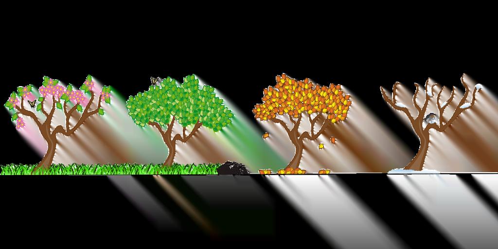 Drzewa ukazujące cztery pory roku