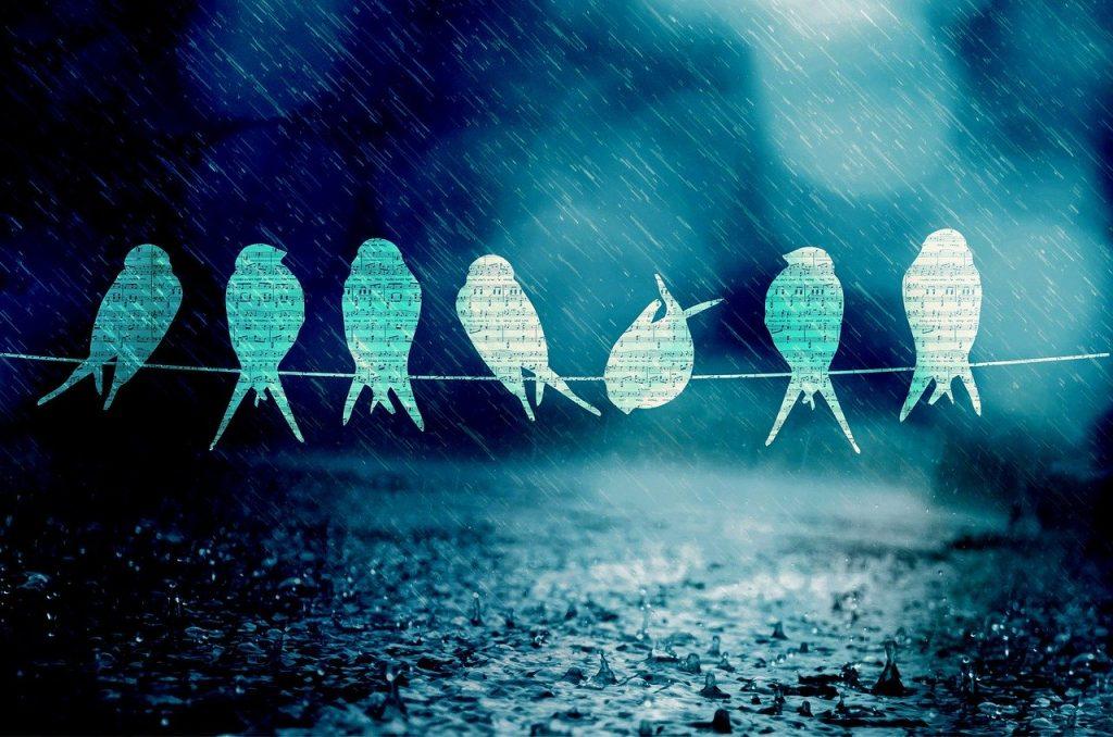 Ptaki siedzące na linii, ich kontury wypełnione są nutami, pada deszcz.