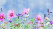 Wiosenne brzmienia – scenariusz zajęć rewalidacyjno-wychowawczych